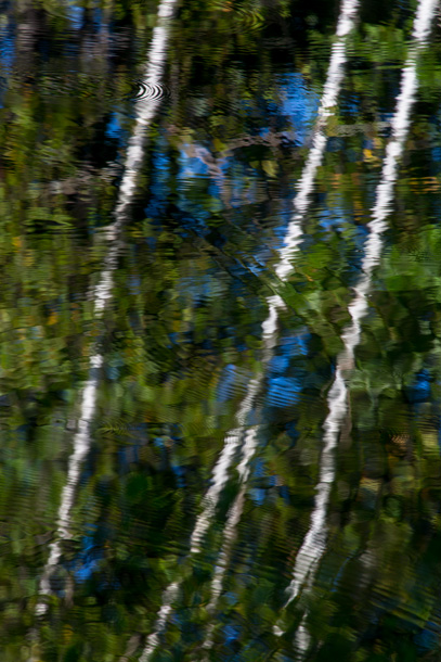 Birch trees are reflected in a Pomfret, VT, pond.