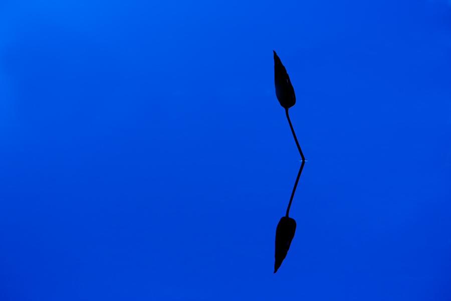 Solitary Reflection