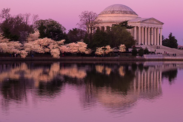 Jefferson Cherry Blossoms